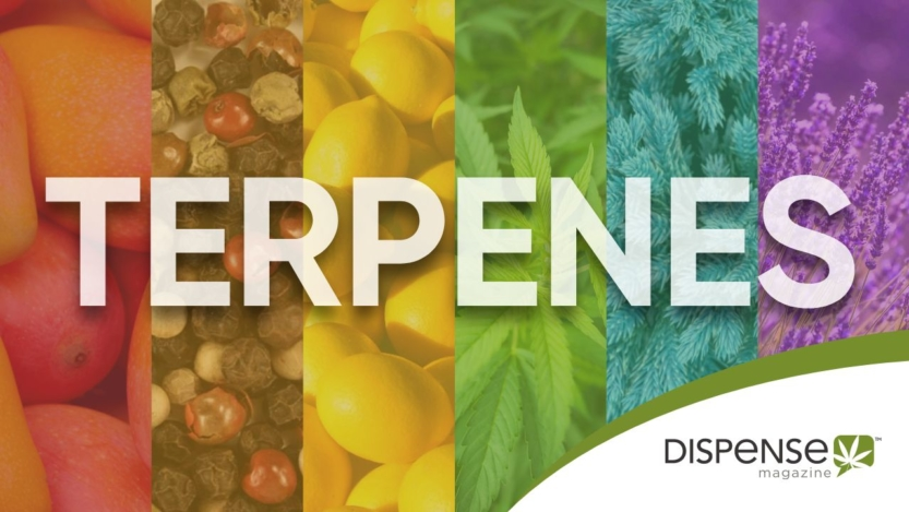 Cannabis Terpenes, a guide for Medical Marijuana Patients